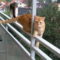 gatos cmo